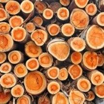 تصفیه آب در صنایع چوب و کاغذ